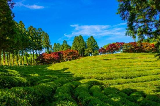 寶城綠茶莊