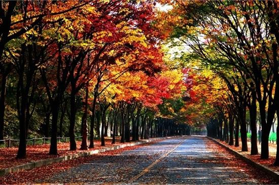仁川大公園(10月26日至11月10日出發團隊適用)