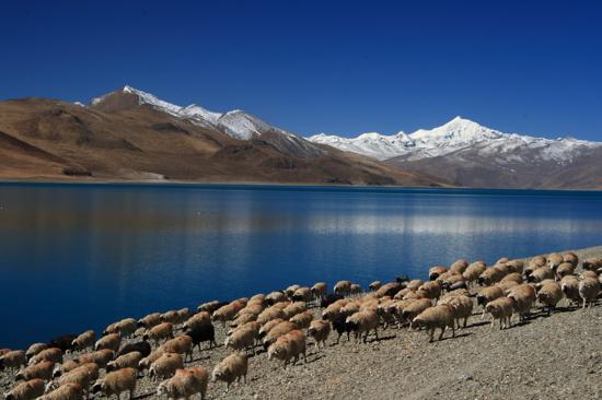 羊卓雍湖冬景