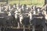 Curringa農場體驗傳統澳式農莊