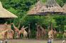 野生動物園 Safari World Bangkok3
