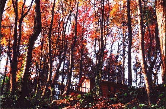 古東紅楓林