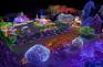 晨靜樹木園~夜燈慶典