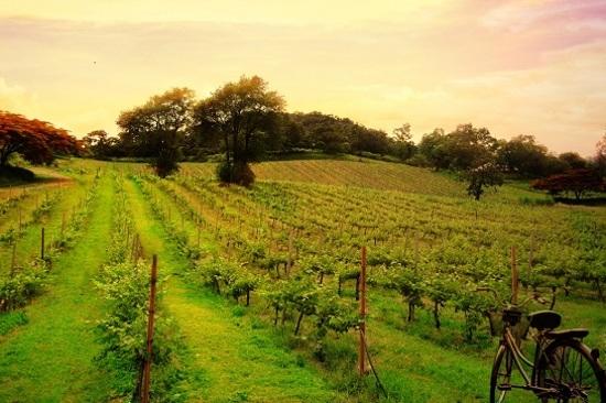 PB Valley葡萄園