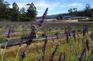 薰衣草農莊