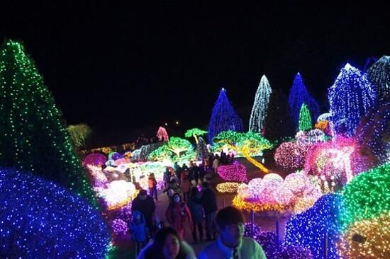 晨靜樹木園(五色星光庭園展)