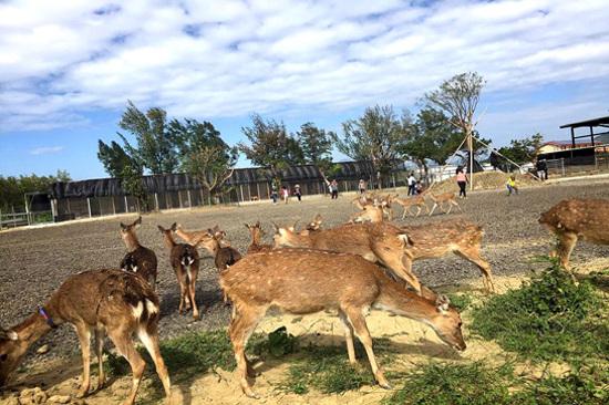 鹿境生態梅花鹿園