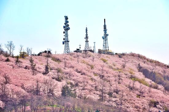遠眺三陟鳳凰山(4月1至16日出發適用)