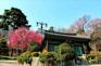 首爾奉恩寺(3月10至31日出發適用)