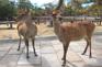 奈良神鹿公園