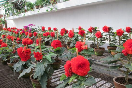 金日成花草溫室