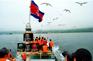 乘船出海觀賞野生海狗