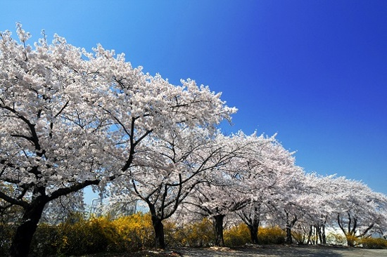 仁川大公園