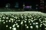 LED玫瑰花海