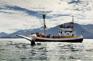 大西洋觀鯨之旅