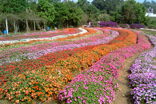 富田花園農場