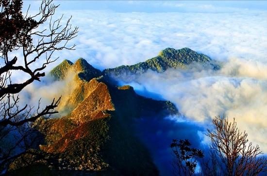 金佛山雲海