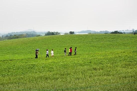 全羅北道‧鶴苑觀光農園(4月17日至5月14日出發團隊適用)