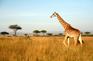 比林斯堡野生動物保護區