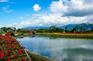 池上四季花海