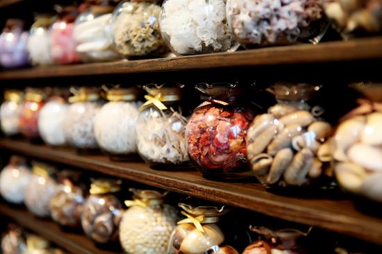 世界貝殼博物