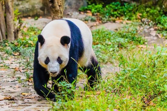熊貓主題郵局