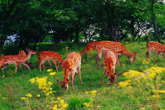 官門山景區~野生動物樂園