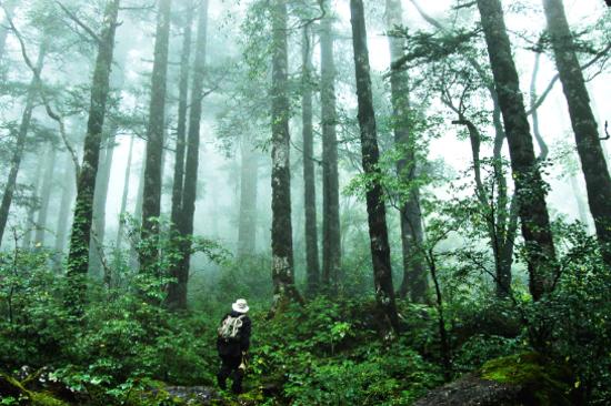 神農架國家森林公園