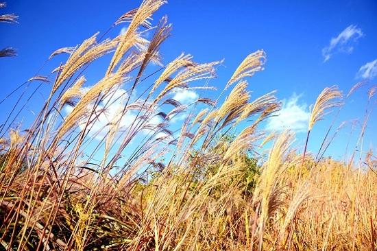 《增遊》天空公園(賞紫芒草)(10月1日至31日出發適用)1