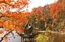 清涼寨~紅葉