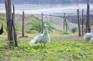 田野綠世界