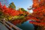 名花之里鏡池紅葉