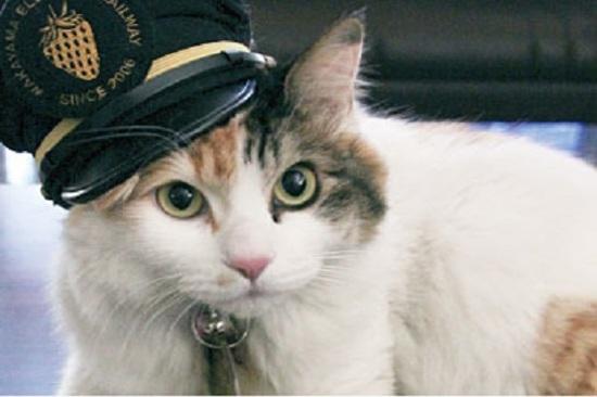 和歌山人氣貓站長