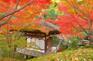 紅葉渓庭園の紅葉2