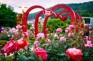 《增遊》大邱梨谷公園(賞玫瑰)(註1) (4月20日至5月14日出發團隊適用)