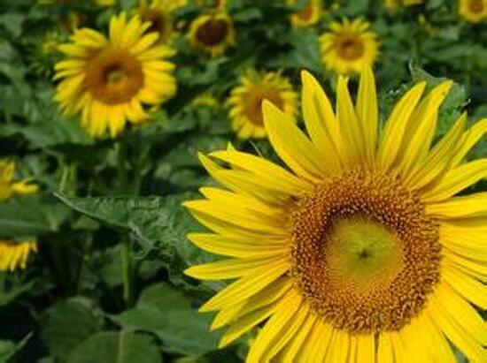 偉豐農場花卉世界