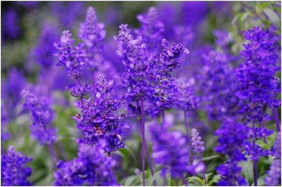 花都香草世界