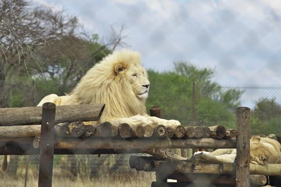 南非獅子園