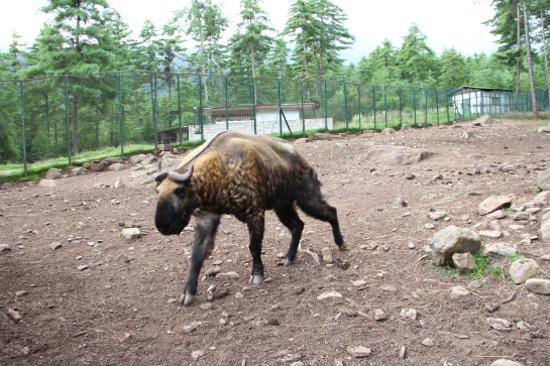 塔金自然保護區