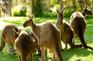 野生動物保護區