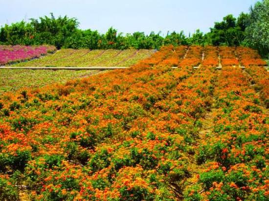 東部華僑城茶溪谷度假區