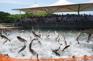 千島湖巨網捕魚