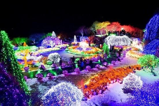 晨靜樹木園~五色星光庭園展