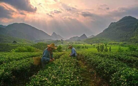慶里紅茶谷