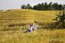 田家舍生態農場
