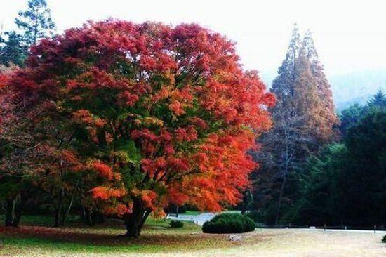 盧山植物園