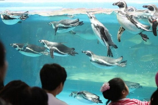 鏡浦海洋水族館