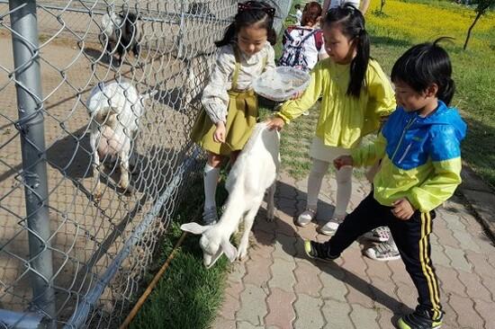 Ssangdoyil動物農莊