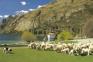 瓦爾特峰高原牧場