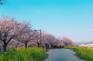 釜山大渚生態公園